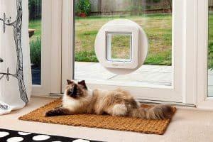 High tech pet door and cat.