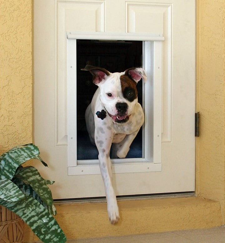 2020 S Best Smart Pet Doors And Why You Should Have One